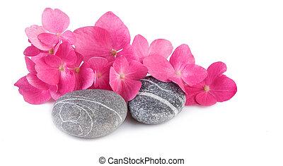 광천, 돌, 와, 분홍색의 꽃, 백색 위에서, 배경