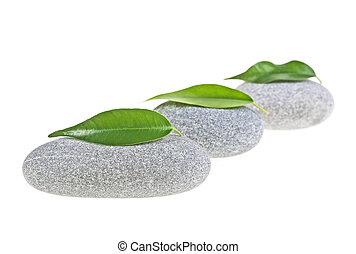 광천, 돌, 와, 잎, 고립된, 백색 위에서, 배경