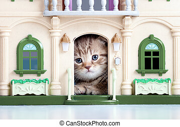 귀여운, 고양이 새끼, 주의하는 것, 장난감 집
