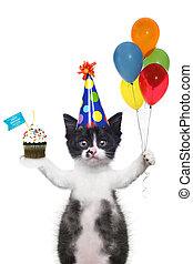 귀여운, 바람, 생일, 고양이 새끼, 당신, 행복하다