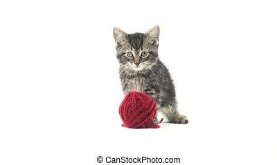 귀여운, 얼룩 고양이, 작은 그물을 짜는 섬유, 고양이 새끼