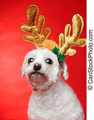 귀여운, 크리스마스, 개, 와, 순록, 가지진 뿔