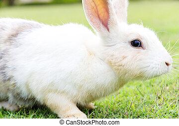 귀여운, 토끼, 초지에