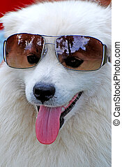 귀여운, 하얀 개, 부드러운 털의