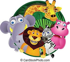 그룹, 동물