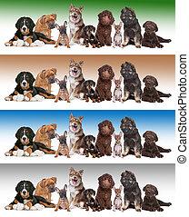 그룹, 의, 강아지, 통하고 있는, 다양한, 경사, 배경