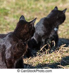 그룹, 의, 고양이