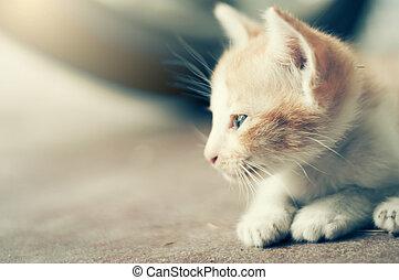 극적인, 순간, a, 그룹, 의, 다른, 고양이 새끼, 잠, 통하고 있는, 그만큼, floor.in, 은 연화한다, 초점.
