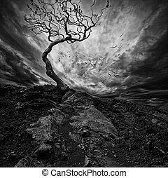극적인 하늘, 위의, 늙은, 고독한, 나무