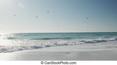 근해의, 기절시키는, 조경술을 써서 녹화하다, 바닷가