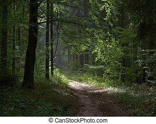 길, 에서, 숲