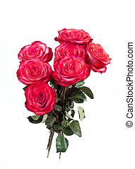 꽃다발, 의, 빨간 장미, 통하고 있는, 그만큼, 백색 배경
