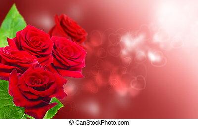 꽃다발, 의, 빨강, roses.