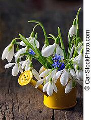 꽃다발, snowdrops, 작다, 급수 깡통