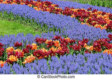 꽃밭, 에서, keukenhof, 정원