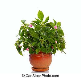 꽃 같은, 식물, 에서, 냄비 따위 하나 가득
