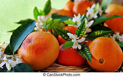 꽃, 과일, 오렌지