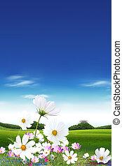 꽃, 들판, 하늘
