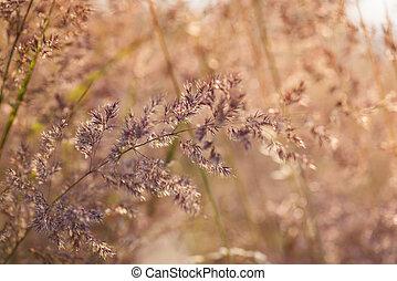 꽃, 목초지