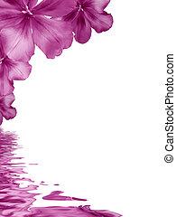 꽃, 배경, 반영하는, 에서, 물