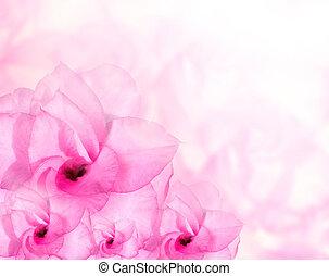 꽃, 배경., 핑크, 진달래, 꽃