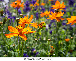 꽃, 에서, 여름