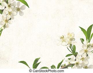 꽃, 의, 버찌