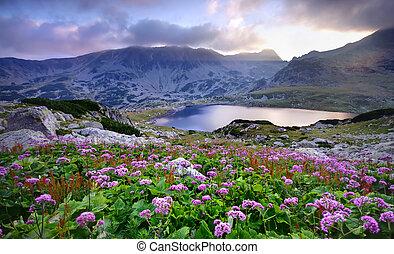 꽃, 호수, 산