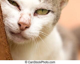끝내다, 고양이, 위로의, 얼굴