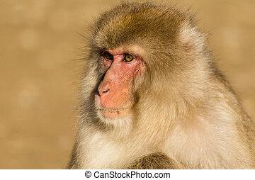 끝내다, 원숭이, 위로의
