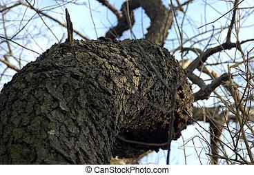 나무의 줄기
