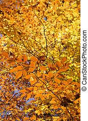나무, 가을, foliage.