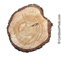 나무 그루터기, 고립된, 백색 위에서, 배경
