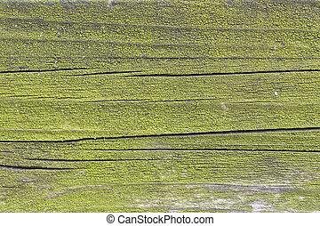 나무, 녹색