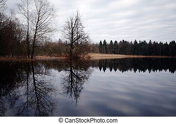 나무, 반영된다, 물