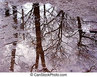 나무 반영, 에서, 물웅덩이