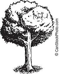 나무, 벡터, 오크, 삽화