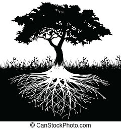 나무, 뿌리, 실루엣