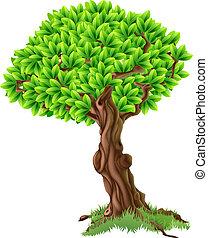 나무, 삽화
