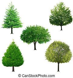 나무, 수집
