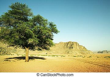 나무, 에서, 그만큼, 사막