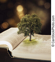 나무, 에서, 그만큼, bible.
