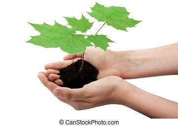 나무, 에서, 손