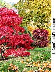 나무, 에서, a, 일본 정원