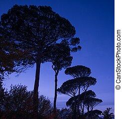 나무, 위의, 밤 하늘