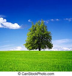 나무, 통하고 있는, 녹색 분야