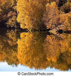 나무, 호수, 에서, 가을