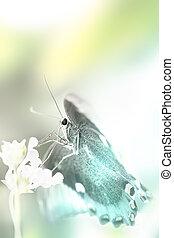 나비, 공상