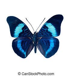 나비, 통하고 있는, a, 백색 배경, 에서, 높은, 정의