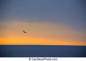 날고 있는 갈매기, 위의, 그만큼, 바다, 에, 일몰